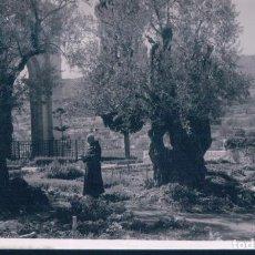 Postales: POSTAL GARDEN OF GETHSEMANE - INTERIOR - ISRAEL. Lote 187162582