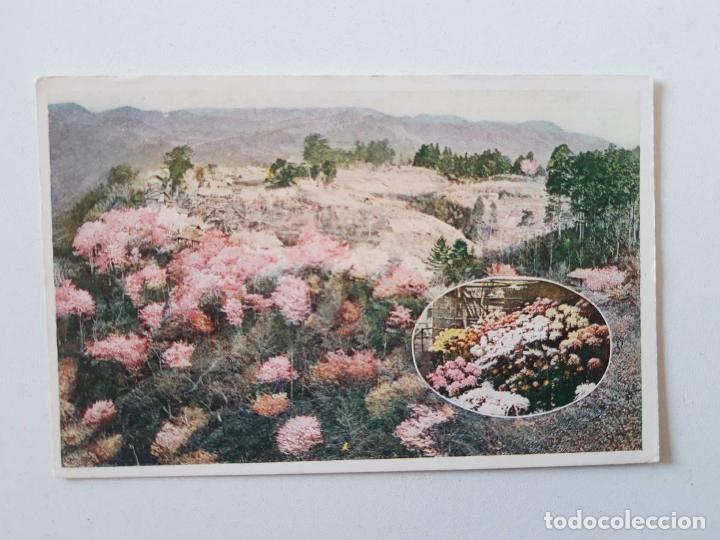 JARDÍN DE FLORES, JAPÓN, POSTAL 0009 (Postales - Postales Extranjero - Asia)