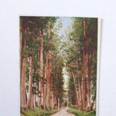 Postales: THE CRYPTOMERIA AVENUE, NIKKO, JAPÓN, POSTAL 0086. Lote 200731268