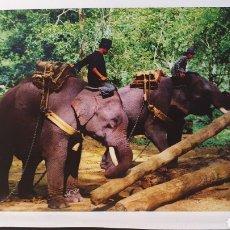 Postales: THAILAND/ ELEPHANTS/ CIRCULADA/( REF.D112). Lote 218982202