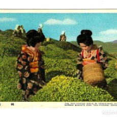 Postales: ANTIGUA POSTAL JAPÓN MUJERES CON KIMONO TRADICIONAL RECOLECTANDO TÉ. Lote 248692160