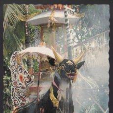 Postales: INDONESIA. BALI. *A CREMATION IN BALI* CIRCULADA.. Lote 271567358
