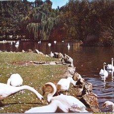 Postales: GIJON PARQUE ISABEL LA CATOLICA- ESTANQUE DE CISNES. Lote 19690947
