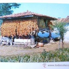 Postales: POSTAL, ASTURIAS, HORREO TIPICO ASTURIANO, Nº27. Lote 27523349