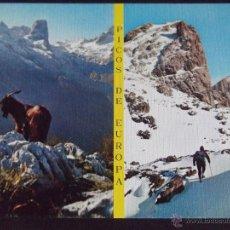 Postales: ASTURIAS-V5-NUEVA-Nº37-PICOS DE EUROPA-MACIZO CENTRAL-NARANJO DE BULNES-PEÑA VIEJA. Lote 52589127