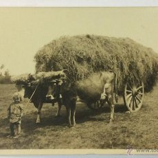 Postales: ASTURIAS. UN FUTURO LABRADOR. PAREJA BUEYES POSTAL FOTOGRÁFICA (CELESTINO COLLADA). CIRCULADA 1925.. Lote 53550409