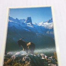 Postales: POSTAL SIN CIRCULAR DE NARANJO DE BULNES - Nº143 PICOS DE EUROPA - NARANJO DE BULNES - 1993. Lote 106795651