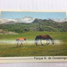 Postales: POSTAL SIN CIRCULAR DE PARQUE N. COVADONGA - Nº238 PICOS DE EUROPA - AL FONDO PEÑA SANTA - 1993. Lote 106796791