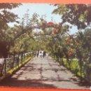 Postales: GIJÓN ASTURIAS PARQUE ISABEL CATÓLICA ROSALEDA. Lote 160527626