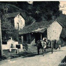 Cartes Postales: PRECIOSA POSTAL - PUERTO DE PAJARES (ASTURIAS) - FLOR DE ACEBOS. Lote 267794074