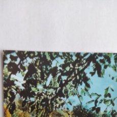 Postales: POSTAL PICOS DE EUROPA. CIERVOS EN LOS MONTES DE FRAMA. N.56. Lote 277044668