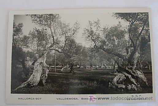 POSTAL DE VALLDEMOSA BOSQUE DE OLIVARES (Postales - España - Baleares Moderna (desde 1.940))