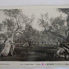 Postales: POSTAL DE VALLDEMOSA BOSQUE DE OLIVARES. Lote 21616014