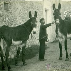 Postales: PETRA. SOMERAS. FOTO MASCARÓ. HACIA 1920.. Lote 28133898