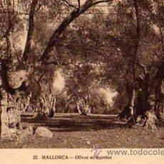 Postales: MALLORCA Nº 22 OLIVOS MILENARIOS ESCRITA CIRCULADA EN EL AÑO 1929 SELLO . Lote 30572946