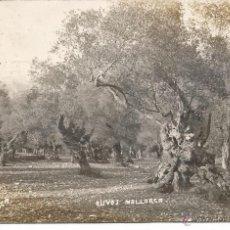 Postales: PALMA MALLORCA-FOTOGRAFICA. Lote 41689276