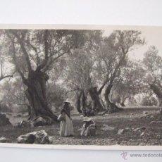Postales: PAISAJE POLLENSA - POSTALES DE MALLORCA - COLECCION BESTARD 113. Lote 51469616