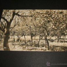 Postales: PALMA DE MALLORCA NARANJOS POSTAL FOTOGRAFICA. Lote 42583044