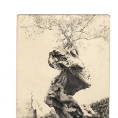 Postales: POSTAL FOTOGRÁFICA BALEARES - MALLORCA - 102. OLIVOS. SIN CIRCULAR.. Lote 46449957