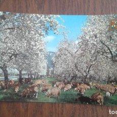 Postales: POSTAL DE INVIERNO EN MALLORCA AÑOS 80. Lote 277677663