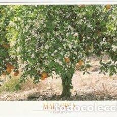 Postales: POSTAL MALLORCA. (REF: 73-111) NARANJOS EN FLOR. Lote 72172659