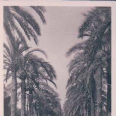 Postales: POSTAL PALMA DE MALLORCA - PASEO DE SAGRERA - TRUYOL - CIRCULADA. Lote 96595667