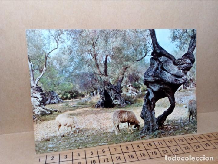 Postales: LOTE 8 POSTALES DE MALLORCA (SIN CIRCULAR) - (AÑOS 70) - REF: 240/250 - Foto 18 - 164004506