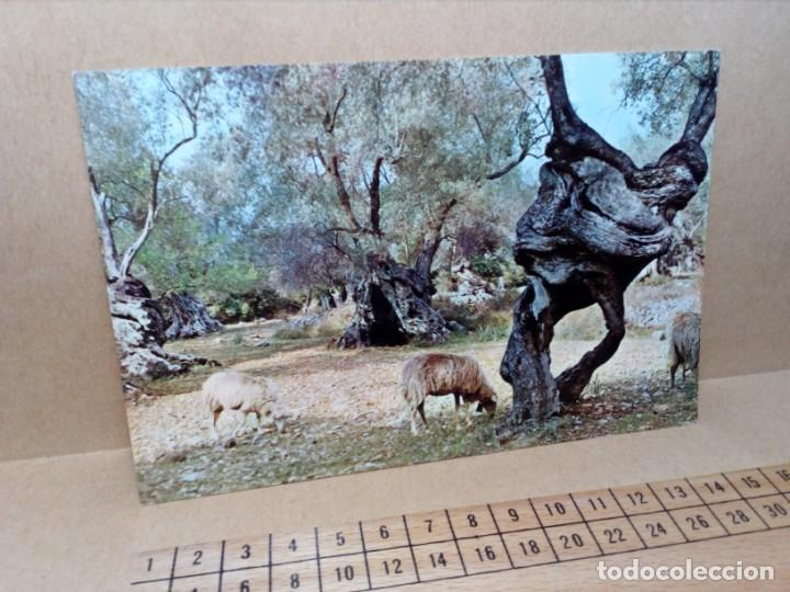 Postales: LOTE 8 POSTALES DE MALLORCA (SIN CIRCULAR) - (AÑOS 70) - REF: 250/260 - Foto 21 - 164004670