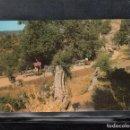 Postales: OLIVOS MILENARIOS. SON MORAGEUES - VALLDEMOSA. Lote 167798748