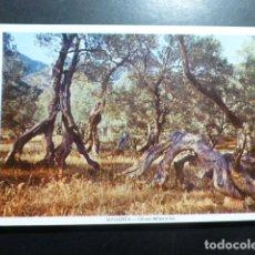 Postales: MALLORCA. Lote 198389481