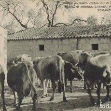 Postales: MAHÓN, MENORCA. MODELO GANADO VACUNO TOMANDO EL FRESCO. FOTO JOSÉ TERRÉS GINAR FOTPIA HAUSER Y MENET. Lote 210976187