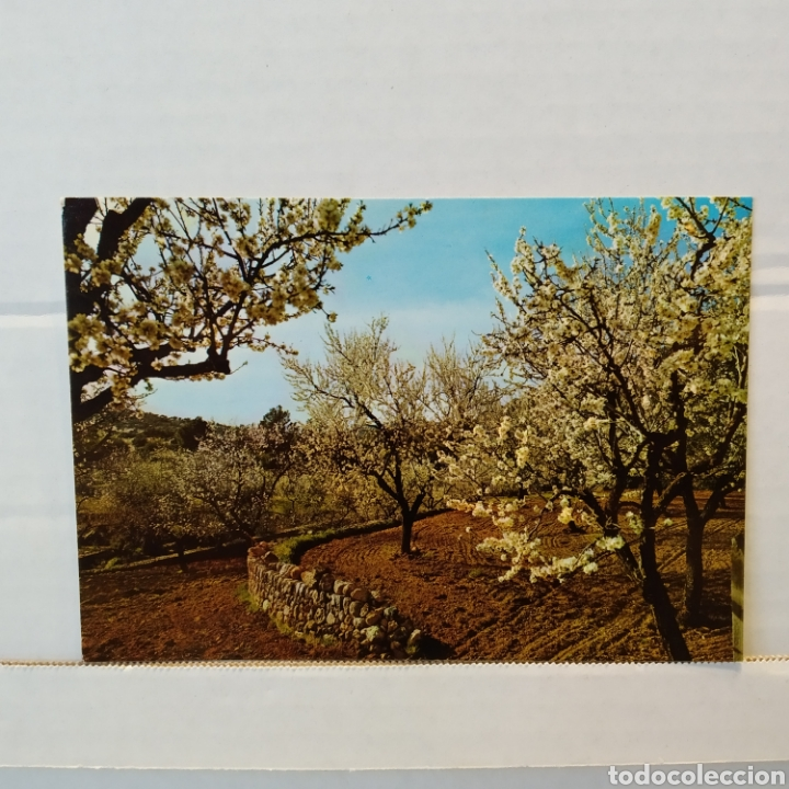 Postales: Gran lote de 15 postales de Malorca - Foto 23 - 216790251