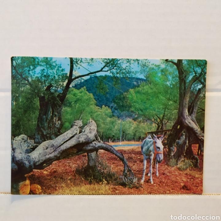 Postales: Gran lote de 15 postales de Malorca - Foto 25 - 216790251