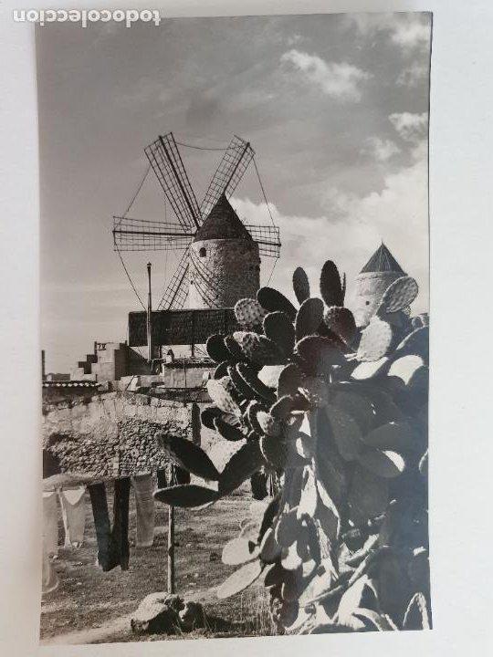 PALMA DE MALLORCA - MOLINOS DE ES JONQUET - LAXC - P52102 (Postales - España - Baleares Moderna (desde 1.940))