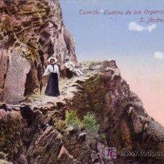 Postales: T.P. Nº141. TENERIFE (CANARIAS).CAMINO DE LOS ORGANOS DE S. ANDRÉS Á IGUESTE.SIN CIRCULAR.MAGNÍFICA.. Lote 26059993