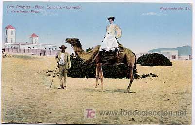 LAS PALMAS DE GRAN CANARIA. CAMELLO. J. PERESTRELLO, PHOTO. . SIN CIRCULAR (Postales - España - Canarias Antigua (hasta 1939))