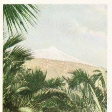 Postales: TENERIFE . PALMERAS Y TEIDE NEVADO. SIN CIRCULAR. Lote 5600350