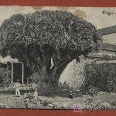 Postales: TENERIFE. DRAGO. LA LAGUNA. NOBREGA´S ENGLISH BAZAR 13827. CIRCULADA EN 1910 A BÉLGICA. Lote 27602768