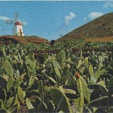 Postales: POSTAL DE LANZAROTE CULTIVOS DE COCHINILLA ISLAS CANARIAS. Lote 8026563