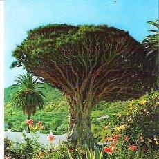 Postales: 97- ICOD DE LOS VINOS / TENERIFE. Lote 8266455