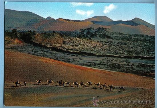 CARAVANA DE CAMELLOS. LANZAROTE (Postales - España - Canarias Moderna (desde 1940))