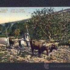 Postales: POSTAL DE LAS PALMAS DE GRAN CANARIA: ARANDO CON BUEYES (ANIMADA). Lote 9899349