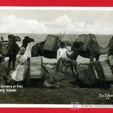 Postales: TENERIFE , CANARIAS , CAMELLOS TRANSPORTADORES EN KEST , FOTOGRAFICA , P29523. Lote 27356202