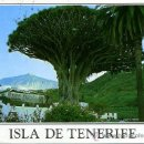 Postales: DRAGO MILENARIO Y AL FONDO EL TEIDE ( TENERIFE )+ POSTALES Y MUCHO + EN MI TIENDA. Lote 12935766