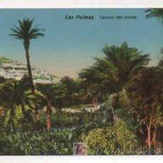 Postales: LAS PALMAS. CAMINO DEL MONTE. (ED. RODRIGUES BROS.). Lote 13597410