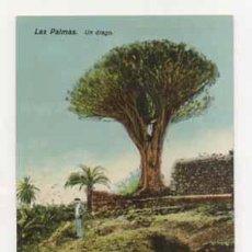 Postales: LAS PALMAS. UN DRAGO. (ED. RODRIGUES BROS.). Lote 13597538