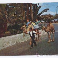 Postales: POSTAL TENERIFE (CANARIAS) - PASEO EN CAMELLO. Lote 13814515