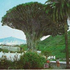 Postales: TENERIFE - DRAGO MILENARIO -. Lote 14881051