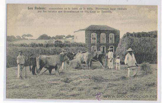 TARJETA POSTAL DE SANTA CRUZ DE TENERIFE LOS RODEOS CAMPESINOS EN LA TRILLA ISLAS CANARIAS (Postales - España - Canarias Antigua (hasta 1939))
