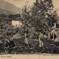 Cartoline: TENERIFE.-EN LA VICTORIA. Lote 19275394